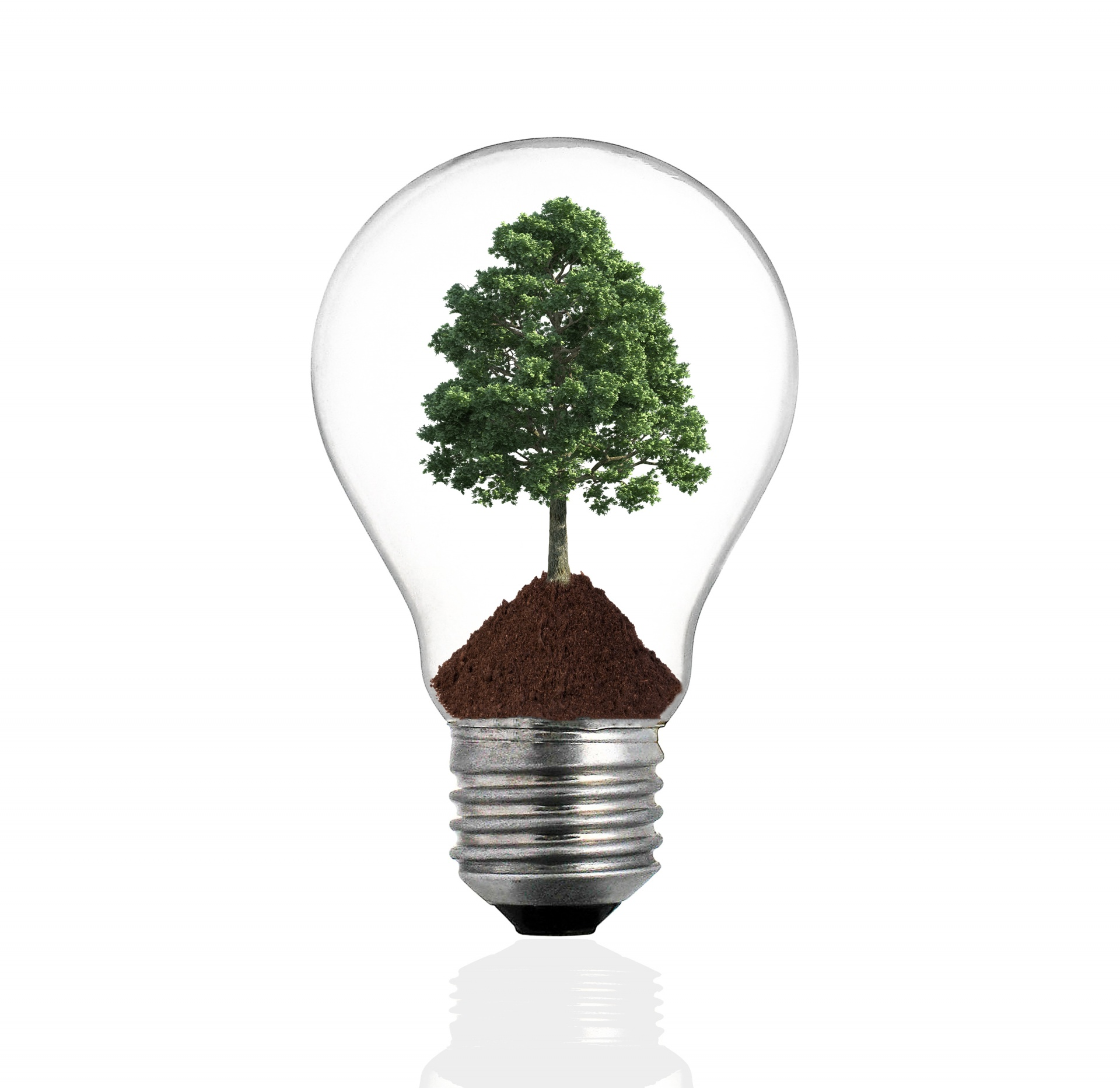 10 Bulb Garden Design Ideas: Garden Idea Image With Lightbulb And Tree
